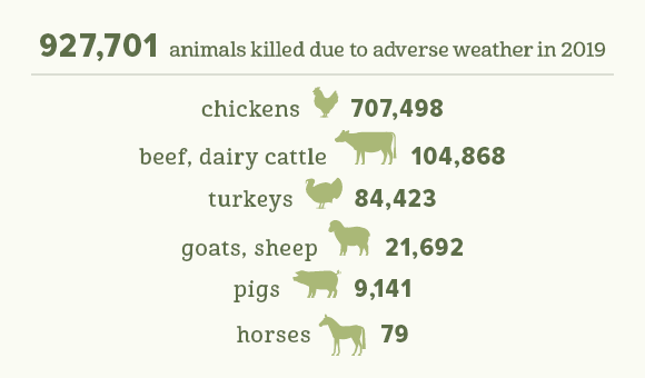 Extreme Weather Deaths for Farm Animals in 2019