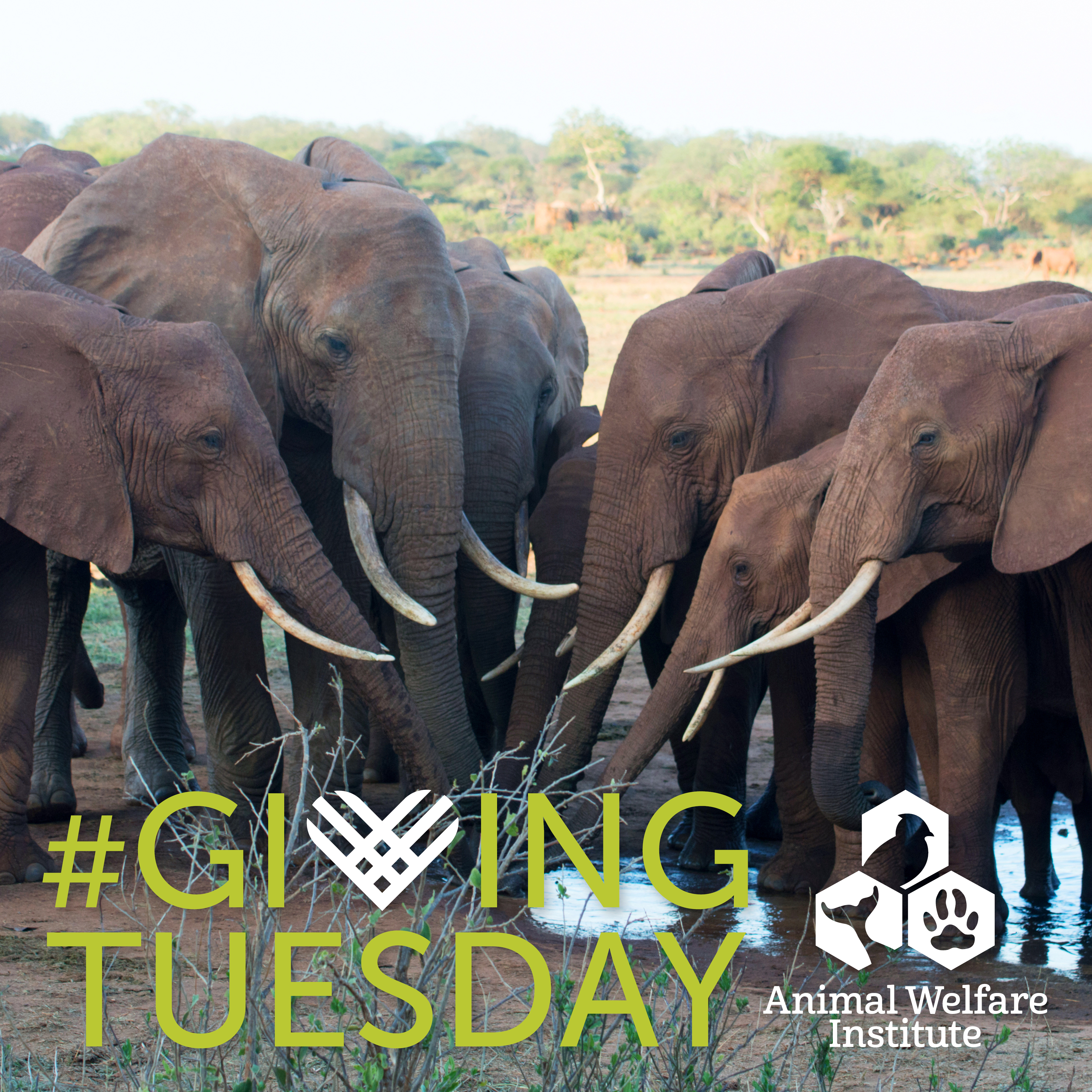Donate to AWI this #GivingTuesday