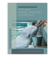 Marine Animal Publications