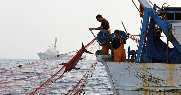 Driftnet fishing - Photo by AWI