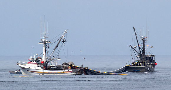 Purse seine fishing - Photo by Tom Clifton