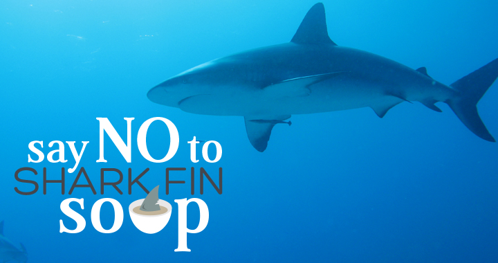Restaurants Currently Offering Shark Fin Soup