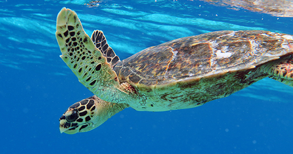 Protection of sea turtles - Photo by Doug Finney