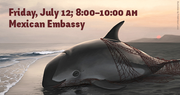 AWI's Annual Rally to Save the Vaquita - Illustration by Frédérique Lucas