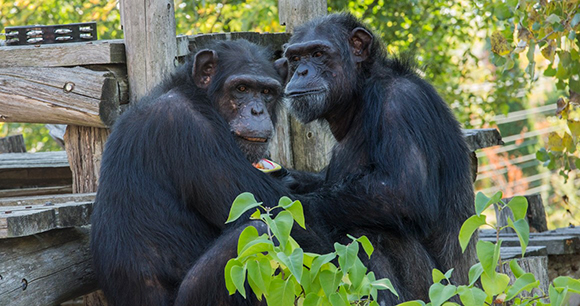 Photo From Chimp Sanctuary by NJ Wight