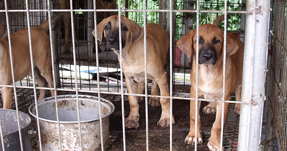 Prevent the Slaughter of Dogs and Cats for Human Consumption in the US