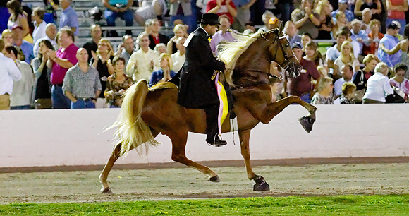 Horse Soring - Photo by Randall R Saxton