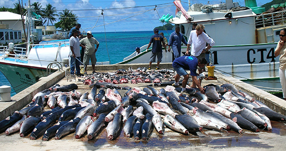 Shark Finning Legislation - Photo by AWI
