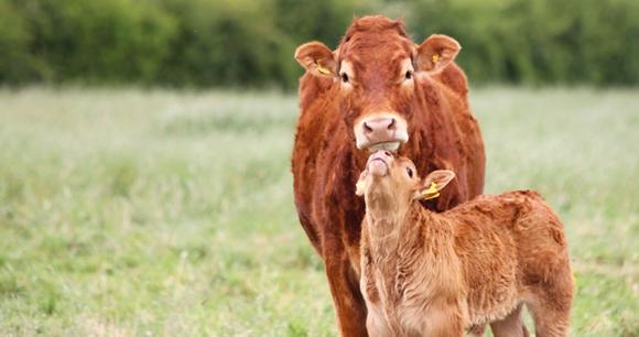 5 Ways You Can Help Farm Animals | Animal Welfare Institute