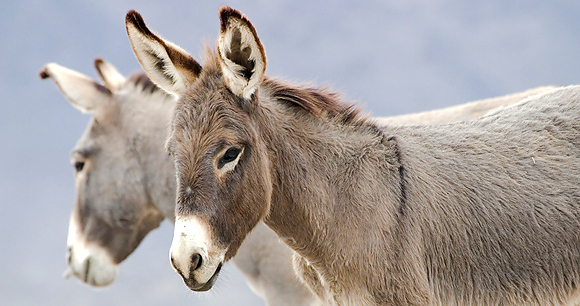 Myths and Facts about Wild Horses and Burros
