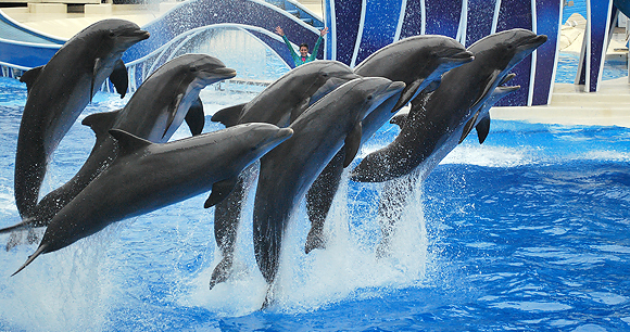 Marine captivity - Photo by Erika Murphy