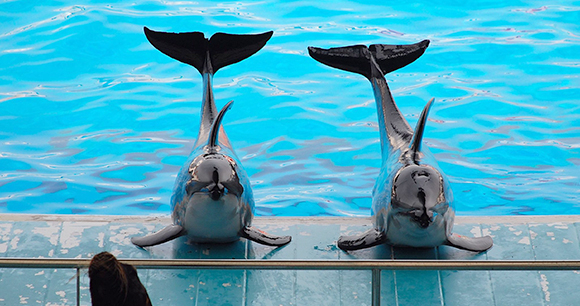 Dolphin show - Photo by Jenny B Lopez
