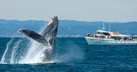 Whale watching - Photo by Wade Tregaskis