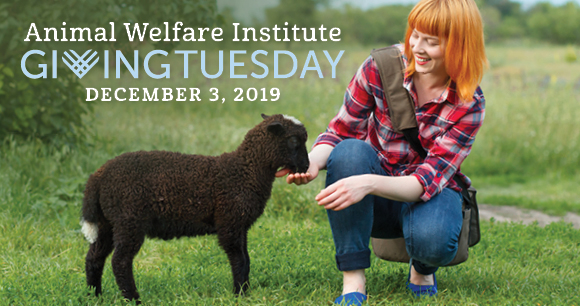 Animal Welfare Institute - Giving Tuesday 2019