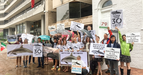 Advocates Rally Outside Mexican Embassy for Vanishing Vaquita Porpoise
