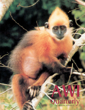 Fall 2001 AWI Quarterly Cover - Photo by Tilo Nadler