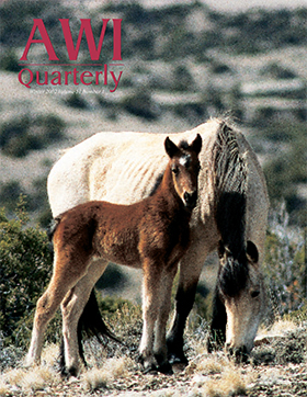 Winter 2002 AWi Quarterly Cover