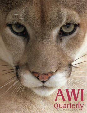 Cougar, Summer 2003 AWI Quarterly Cover - Photo by Frans Lanting/courtesy of Minden Picturesphotographed by Frans Lanting/courtesy of Minden Pictures