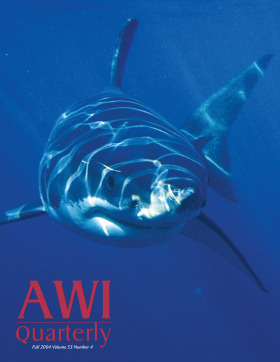 Fall 2004 AWi Quarterly Cover