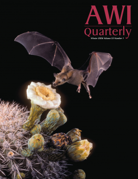 Winter 2006 AWI QUarterly Cover - Photo by Merlin Tuttle