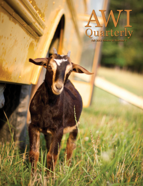 Fall 2013 AWI Quarterly Cover - Photo by Mike Suarez
