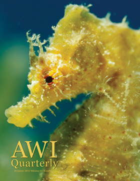 Summer 2013 AWI Quarterly Cover - Photo by Wild Wonders of Europe, Zankl/Minden