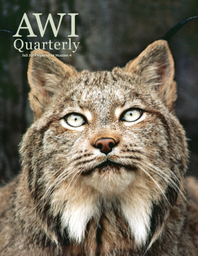 Fall 2015 AWI Quarterly - Cover, Photo by Jim Brandenburg/Minden Pictures