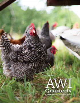 Summer 2016 AWI Quarterly Cover - Photo by Mike Suarez