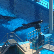 Photo of Tilikum, by Naomi Rose
