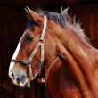 HELP STOP CRUEL TRANSPORT OF HORSES