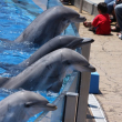 Photo of captive dolphins from Flickr/Nathan in San Diego