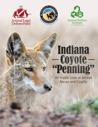 Indiana Coyote Penning Cover