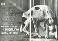 Concentration Camps for Dogs Cover