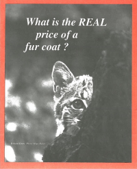 What Is the Real Price of a Fur Coat? Cover