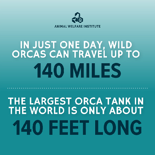 Orca Infographic