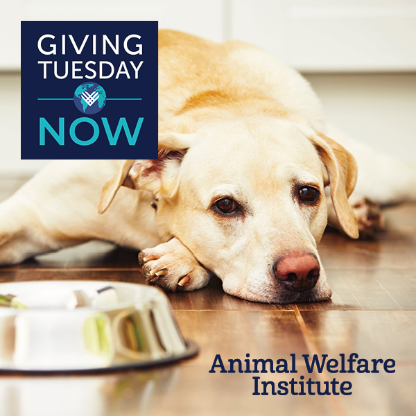 Help Feed Animals in Need on #GivingTuesdayNow