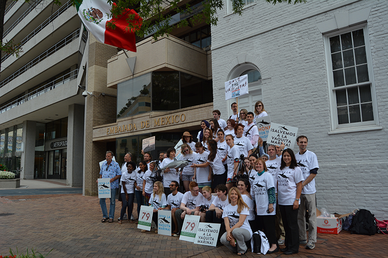 Conservationists Rally Outside Mexican Embassy to Save Vaquita Porpoise