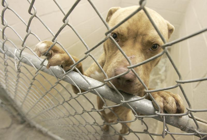 Resolution Encouraging State Bans on Gas Chamber Euthanasia in Shelters (H. Res. 208)  - Photo by Brittany Randolph
