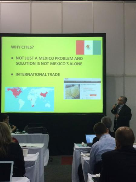 DJ Presenting about the Vaquita at CITES 2016