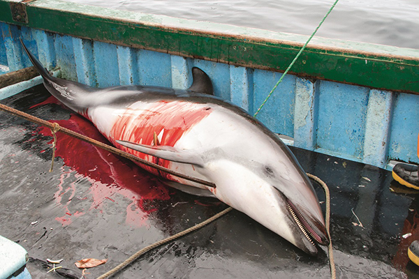 AWI eAlert: Protest Peru's Dolphin and Shark Slaughter - Photo S Austermuuhle Mundo Azul