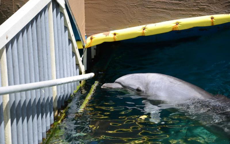 Tell Army Corp of Engineers: No Dolphinarium on St. Thomas - Photo by Orca Research Trust