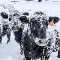 Protect Farm Animals from Extreme Weather!