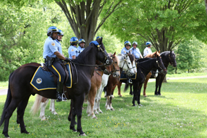Officers and horses of the Philadelphia Police Department's Mounted Police Unit await the start of a press conference with Cong. Patrick Meehan (R-PA) and AWI's Chris Heyde to discuss the bill ending horse slaughter - Photo by Alexandra Alberg