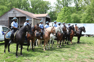 All of the horses used by the Philadelphia Police Department have been donated, with six having been rescued from slaughter. Events like this highlight important alternatives to horse slaughter by showing valuable second careers for horses. - Photo by Alexandra Alberg