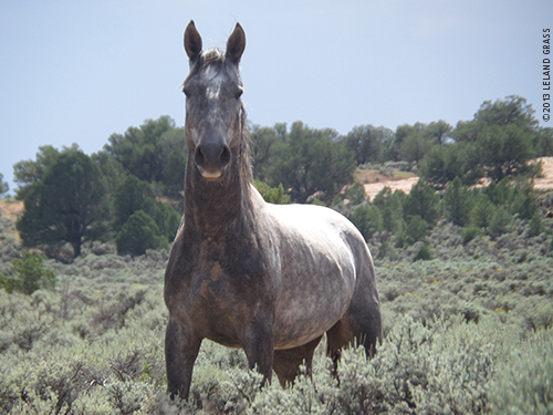A horse on the Navajo Reservation, photo from Leland.