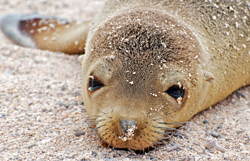 Marine Mammal Protection Act - Photo by A Davey