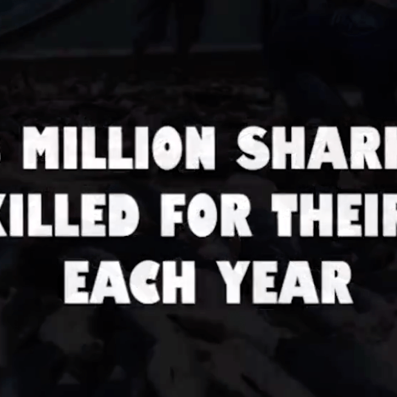 Urge Congress to Pass the Shark Fin Sales Elimination Act