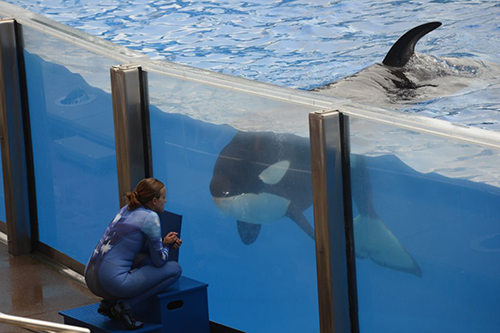 Orcas Need the Ocean, not a Bigger Box!