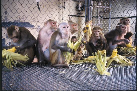 Environmental Enrichment and Refinement of Husbandry for Nonhuman Primates