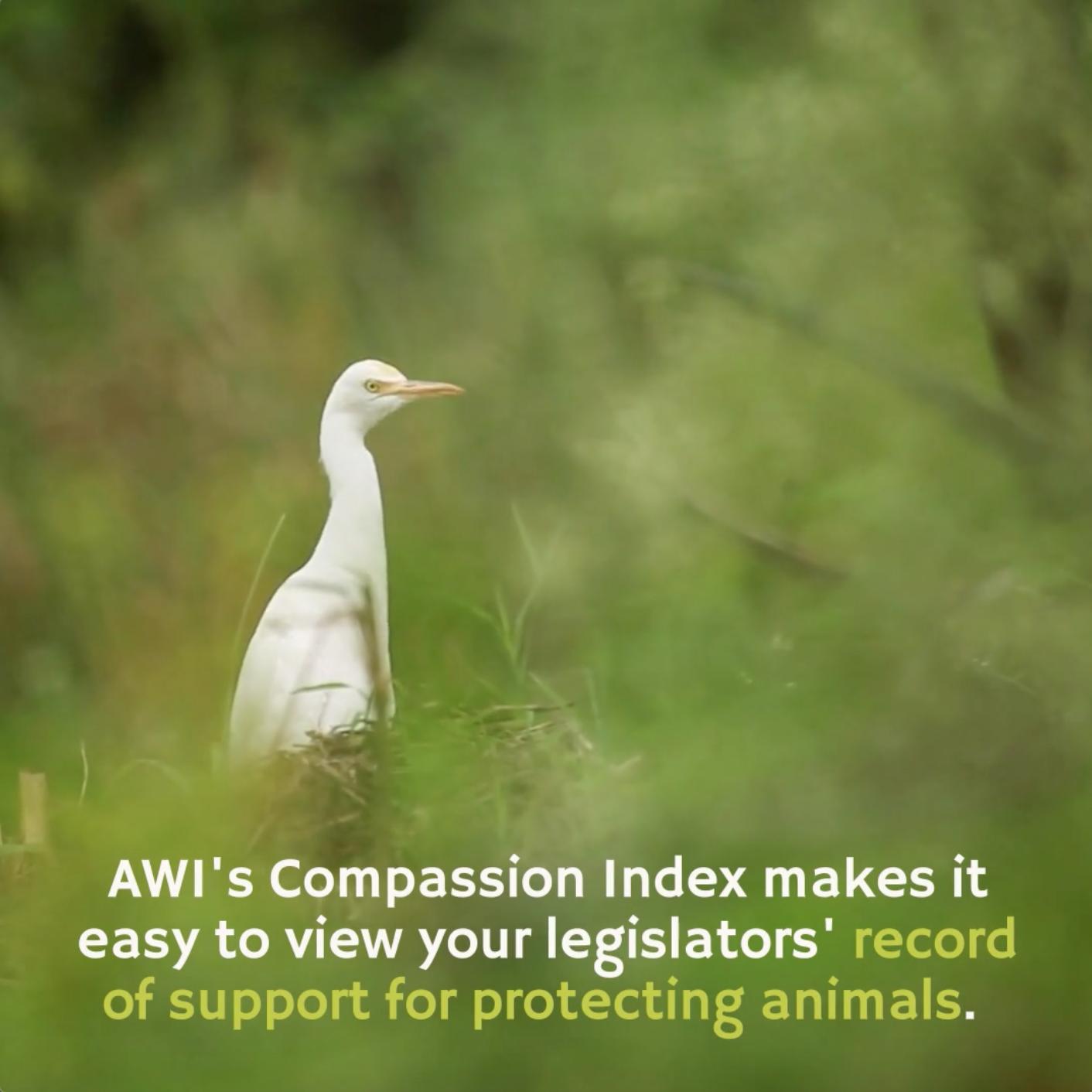 Compassion Index